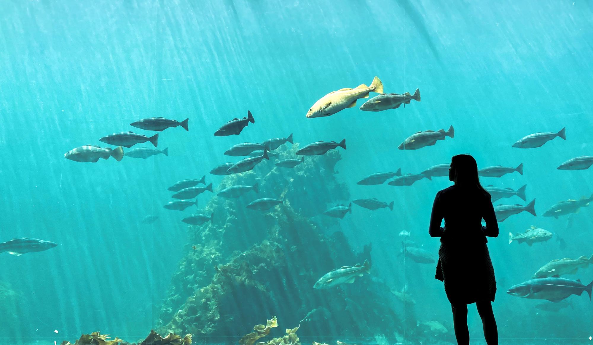 atlanterhavsparken